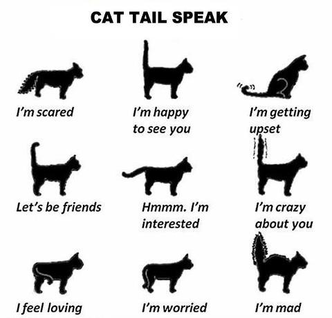 Cat Tail Speak